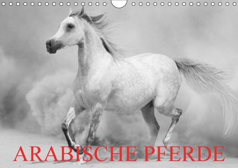 Arabische Pferde (Wandkalender 2018 DIN A4 quer)