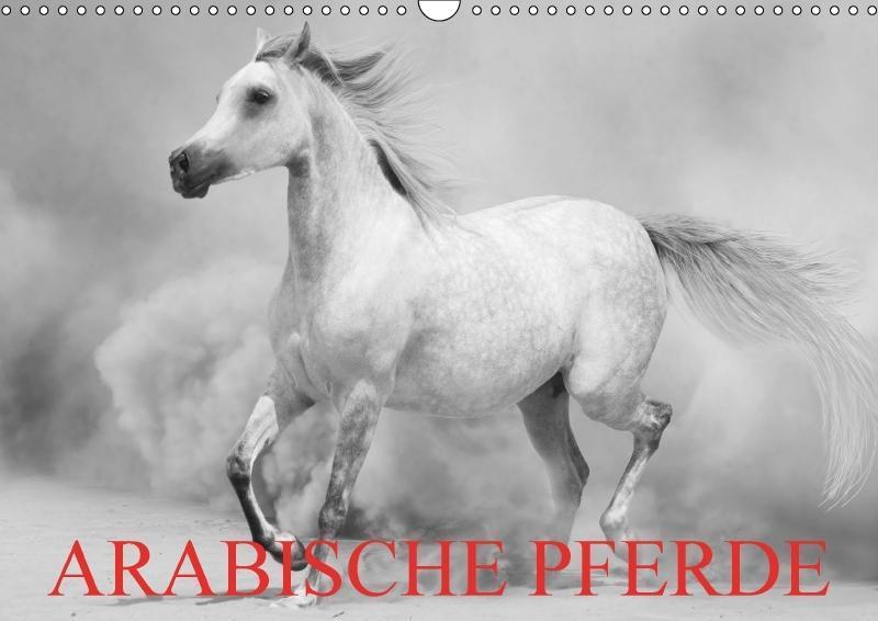Arabische Pferde (Wandkalender 2018 DIN A3 quer)