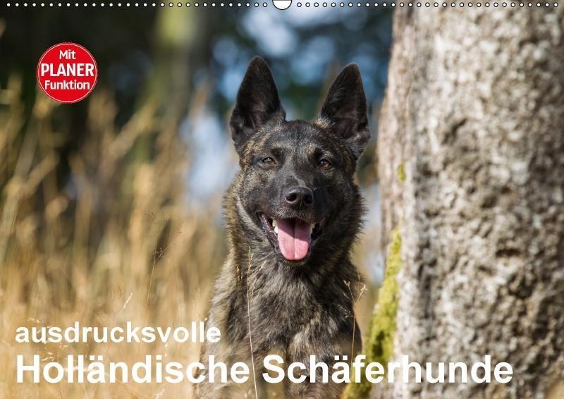 ausdrucksvolle Holländische Schäferhunde (Wandk...