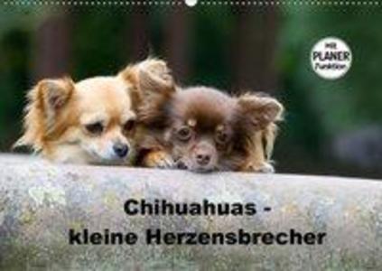Chihuahuas - kleine Herzensbrecher (Wandkalende...