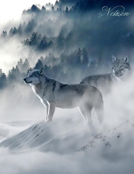 Fantasy Notizbuch: Wölfe im Nebel - weiße Seiten mit Eckmotiv als Buch