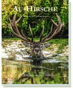 Au-Hirsche