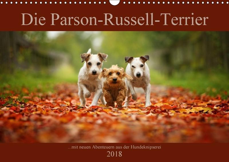 Die Parson-Russell-Terrier ...mit neuen Abenteu...
