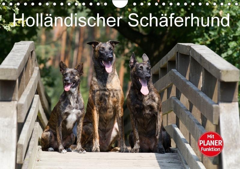 Holländischer Schäferhund (Wandkalender 2018 DI...