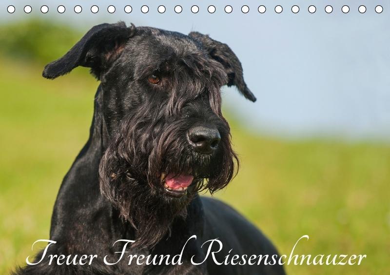 Treuer Freund Riesenschnauzer (Tischkalender 20...