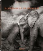 Elephants in Heaven
