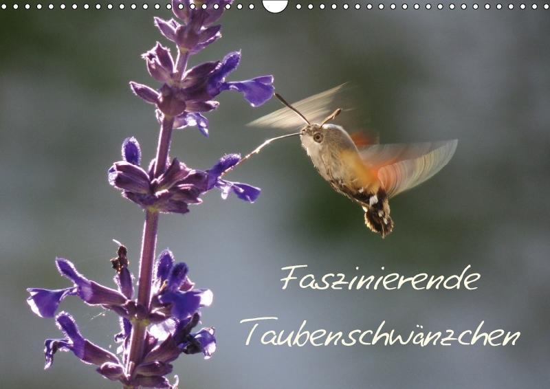 Faszinierende Taubenschwänzchen (Wandkalender 2...