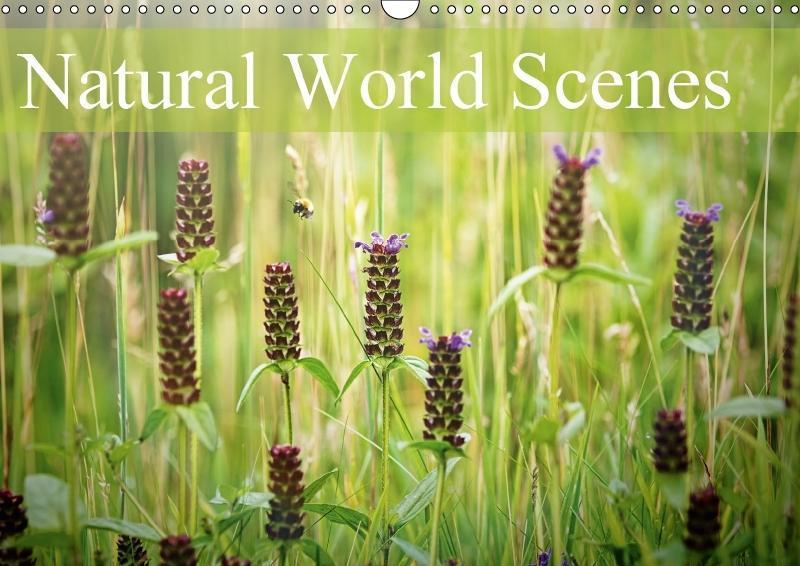 Natural World Scenes (Wall Calendar 2018 DIN A3...