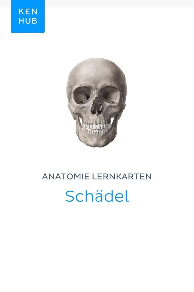Berühmt Gesicht Knochen Anatomie Galerie - Anatomie Ideen - finotti.info