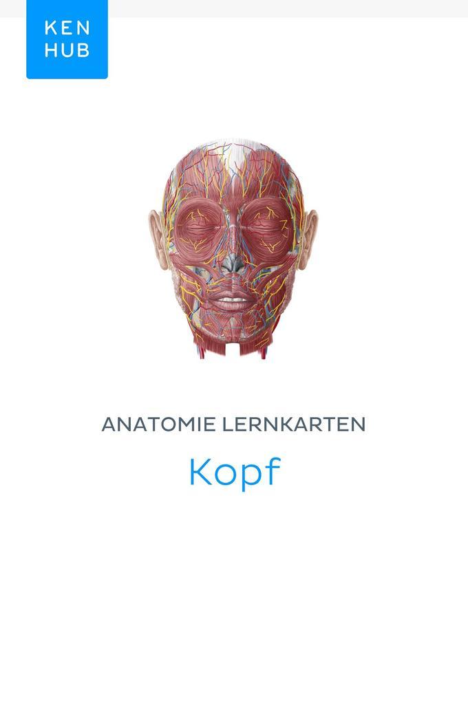 Tolle Die Anatomie Des Kopfes Ideen - Anatomie Ideen - finotti.info