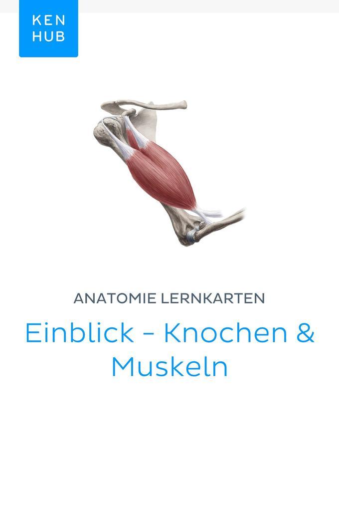 Charmant Anatomie Muskel Lernkarten Bilder - Anatomie Ideen ...