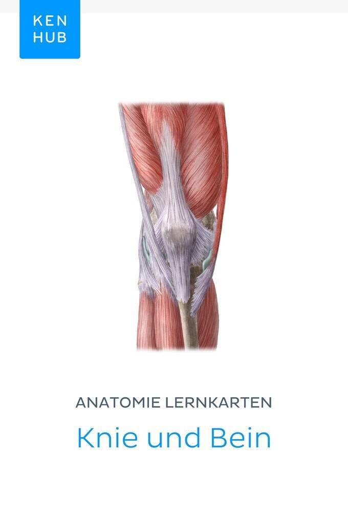 Beste Das Linke Bein Anatomie Zeitgenössisch - Anatomie Ideen ...