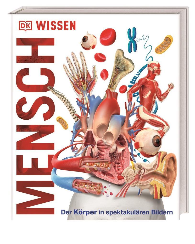 Wissen - Mensch (Buch) bei Hugendubel