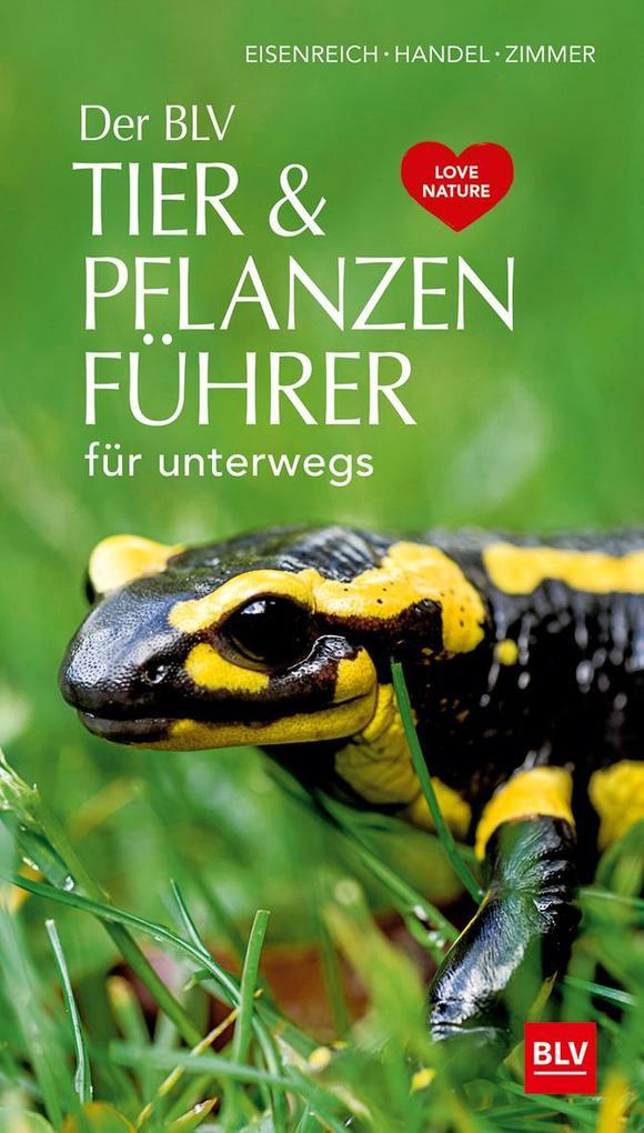 Der BLV Tier & Pflanzenführer als Buch
