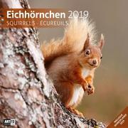 Eichhörnchen 2019 Broschürenkalender
