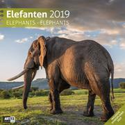 Elefanten 2019 Broschürenkalender