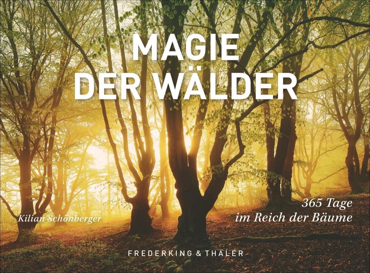 Tischaufsteller Magie der Wälder als Buch