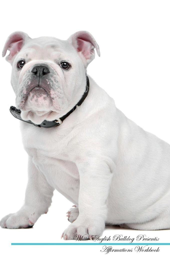 White English Bulldog Affirmations Workbook White English Bulldog Presents als Taschenbuch von Live Positivity