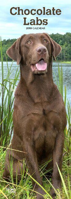 Chocolate Labrador Retrievers - Braune Labrador...