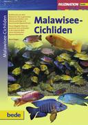 Faszination - Malawisee-Cichliden