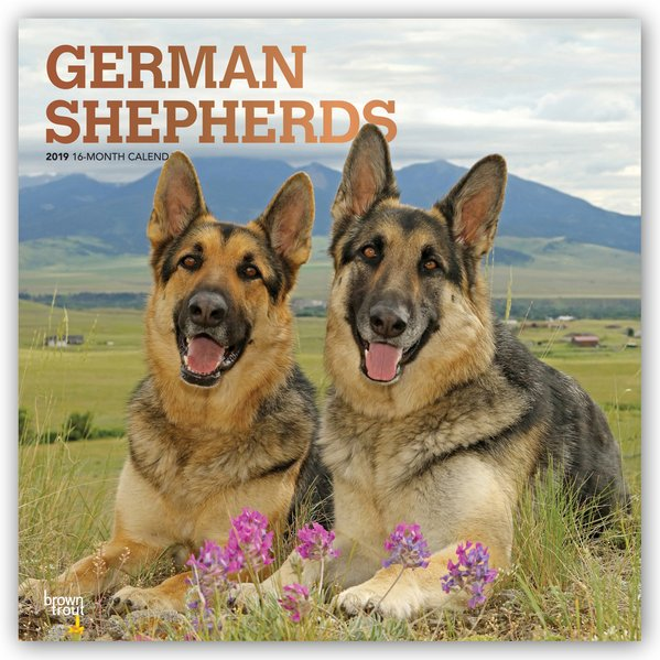 German Shepherds - Deutsche Schäferhunde 2019 -...