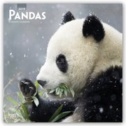 Pandas - Pandabären 2019 - 18-Monatskalender