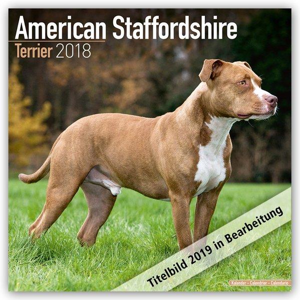 American Staffordshire Terrier - Amstaff 2019