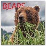 Bears - Bären 2019 - 16-Monatskalender