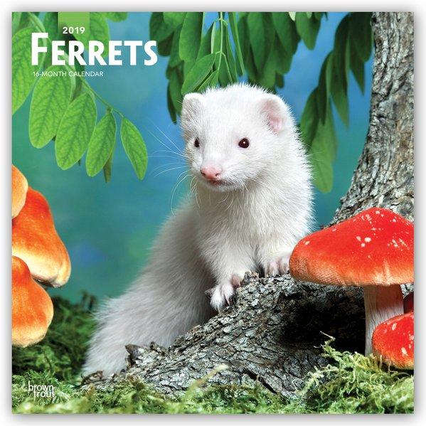 Ferrets - Frettchen 2019 - 18-Monatskalender