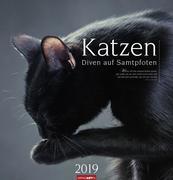 Katzen - Diven auf Samtpfoten - Kalender 2019