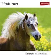 Pferde 2019. Kalender mit 53 Postkarten