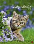 Katzenkinder Posterkalender 2019