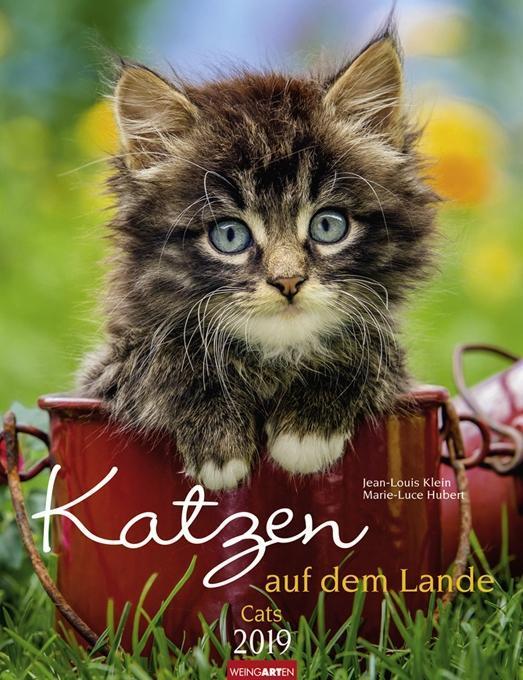 Katzen auf dem Lande - Kalender 2019