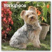Yorkipoos - Yorkie Poos 2019 - 18-Monatskalender