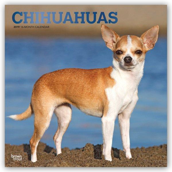 Chihuahuas 2019 - 18-Monatskalender mit freier ...