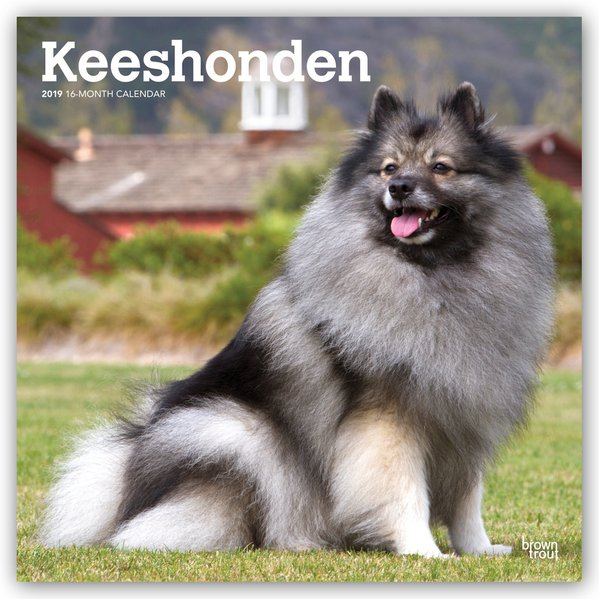 Keeshonden - Wolfsspitze 2019 - 18-Monatskalend...