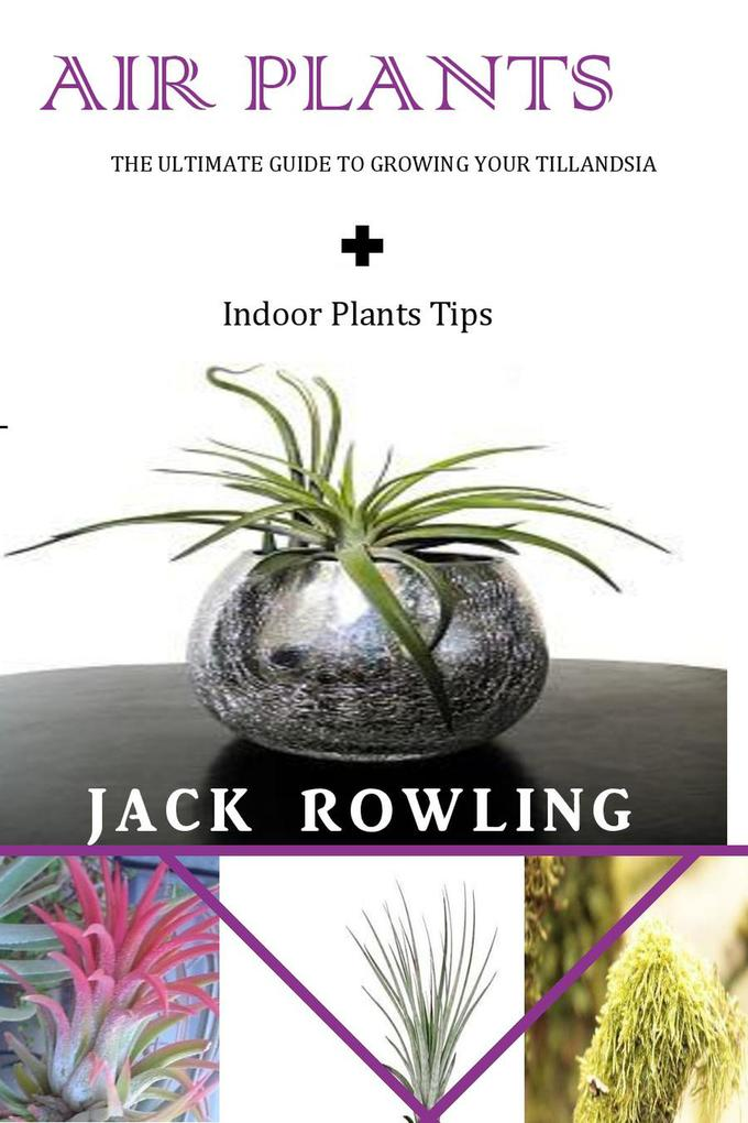 Air Plants: the Ultimate Guide to Growing Your ...