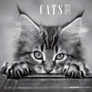 Cats 2019 Broschürenkalender