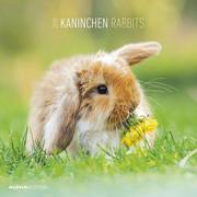 Kaninchen 2019 Broschürenkalender