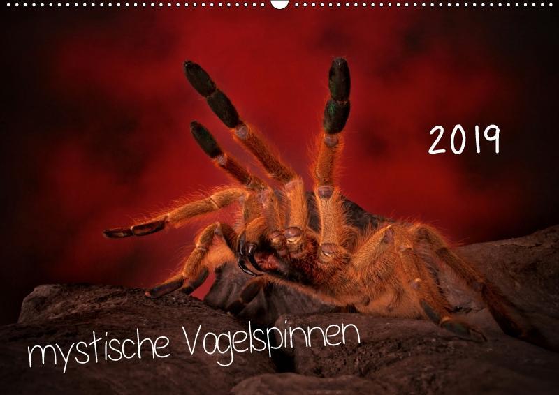 Mystische Vogelspinnen (Wandkalender 2019 DIN A...
