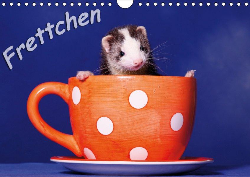Frettchen - Ferrets (Wandkalender 2019 DIN A4 q...