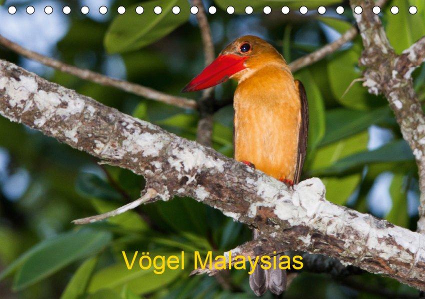 Vögel Malaysias - Birds of Malaysia (Tischkalen...
