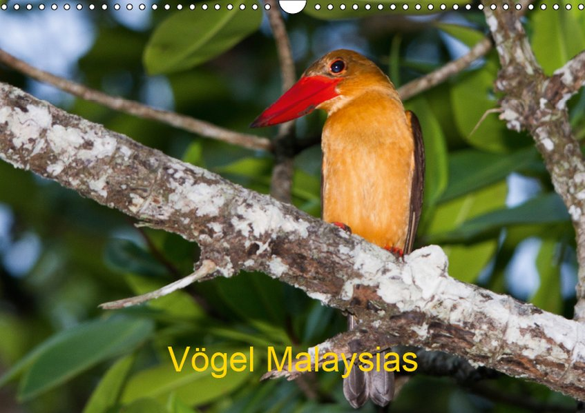 Vögel Malaysias - Birds of Malaysia (Wandkalend...