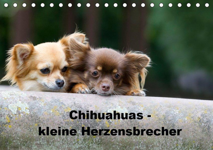 Chihuahuas - kleine Herzensbrecher (Tischkalend...