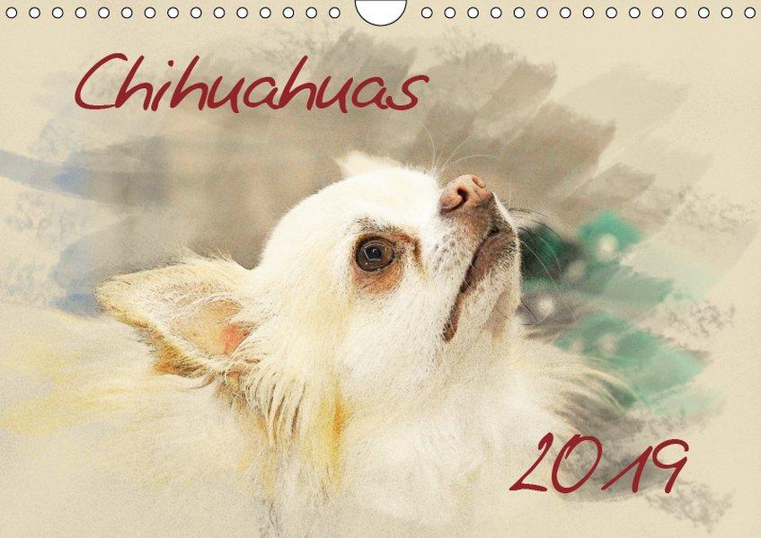 Chihuahuas 2019 (Wandkalender 2019 DIN A4 quer)