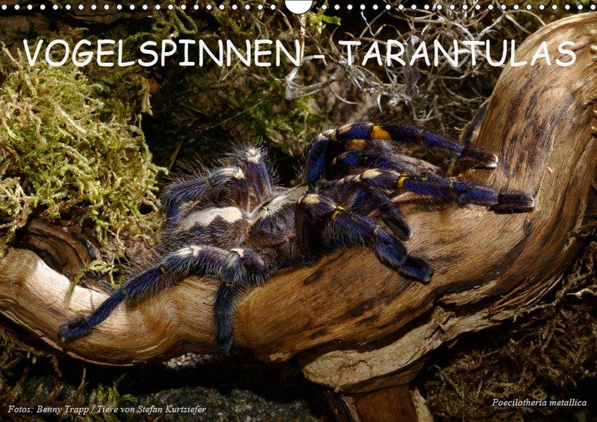Vogelspinnen - Tarantulas (Wandkalender 2019 DI...
