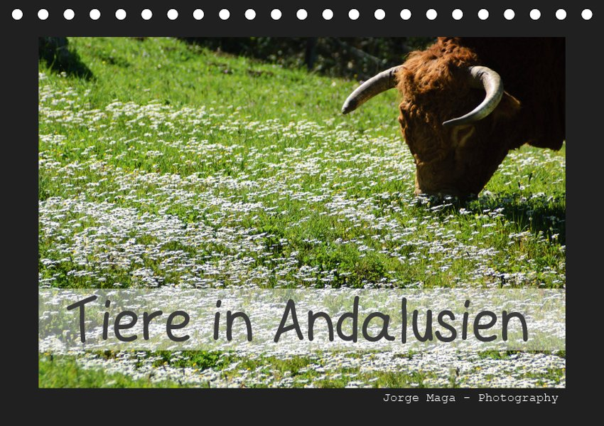 Tiere in Andalusien (Tischkalender 2019 DIN A5 ...