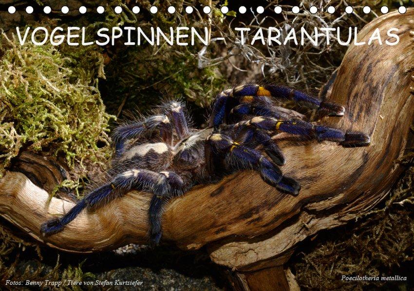 Vogelspinnen - Tarantulas (Tischkalender 2019 D...