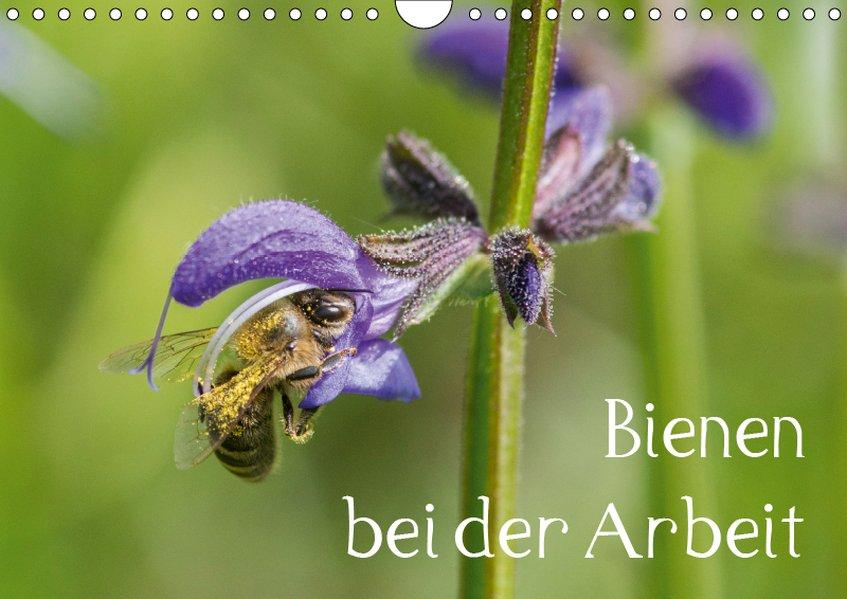 Bienen bei der Arbeit (Wandkalender 2019 DIN A4...