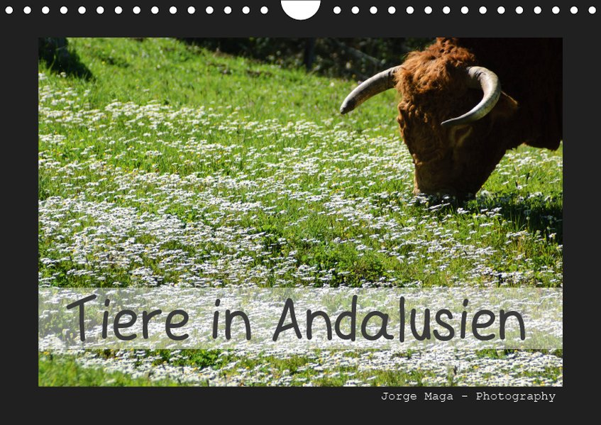 Tiere in Andalusien (Wandkalender 2019 DIN A4 q...